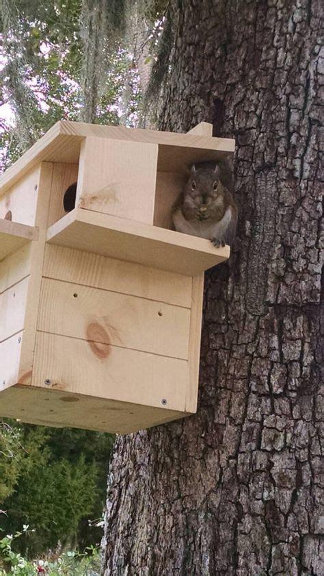squirrel nesting box   order squirrel feeder nesting box squirrel home