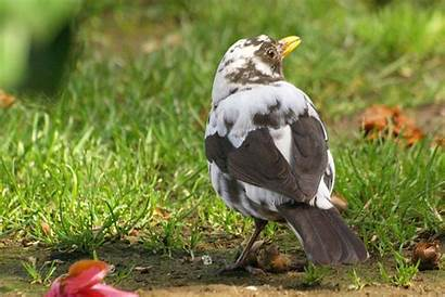 Genetic Causes Examples Definition Blackbird Partial Loss