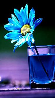 Beautiful Flower Wallpaper Free Download For Mobile   Best ...