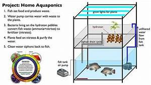 Complete Guide To Aquaponic Gardening