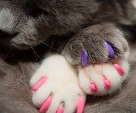 cat nail trimming acrylic nails how to trim cat nails by acrylic nails