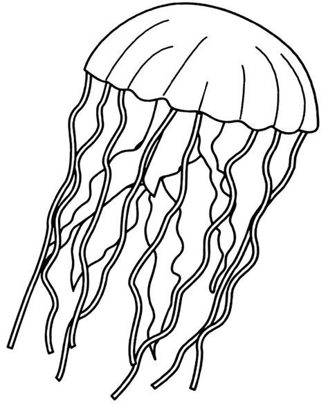 jellyfish coloring page  children medusa printable image