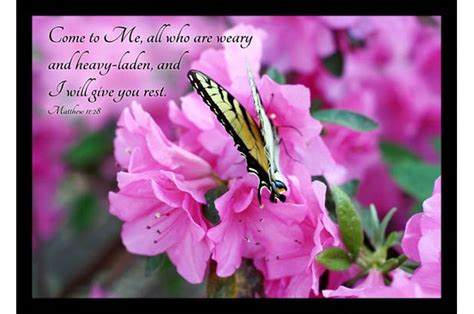 bible verse art swallowtail butterfly  pink azalea