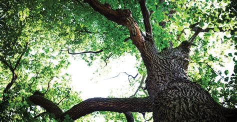 strong winds strong roots  trees teach   life