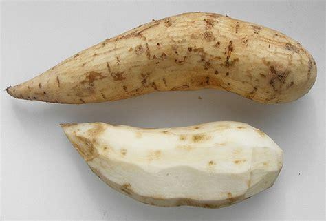 white sweet potato sweet white potato flickr photo sharing