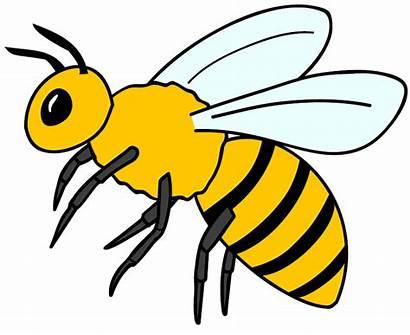 Lebah Kartun Gambar Animasi Hewan Bee Madu