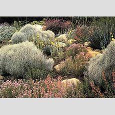 Southern California Garden Ideas  Southern California