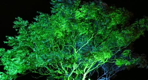 picture green illuminated tree