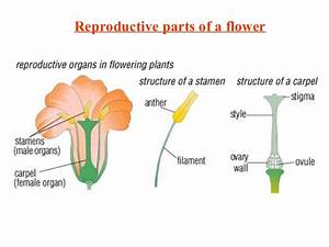 Male Reproductive Part Of Flower Is Called | Flower ...