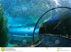 Underwater Aquarium Tunnel Stock Photo - Image: 65336377