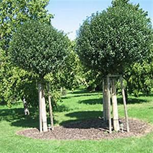 Bäume Für Den Vorgarten : baume fur den vorgarten m belideen ~ Michelbontemps.com Haus und Dekorationen