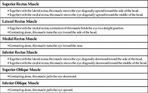 Assessment Of The Eye And Vision