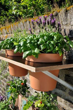 tomaten anpflanzen haengekultur