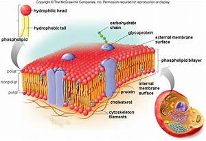 Module 2 Part A Cell Structure
