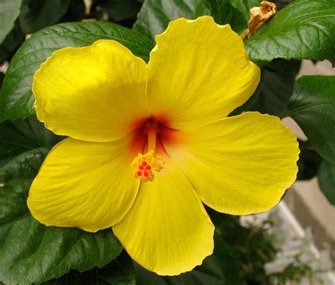 Poppular Photography Yellow Flower In Washington