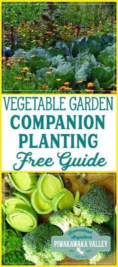 companion planting chart  vegetables  herbs