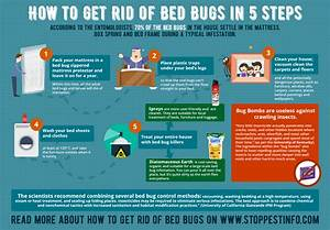 how to inspect spot and get rid of bedbugs potentash With does washing get rid of bed bugs