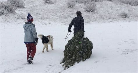utah christmas tree permits tree permits now available across utah mylocalradio