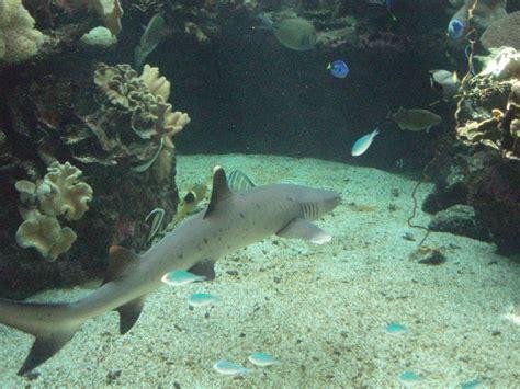 petit requin de recif photo de aquarium avec ludo les deux zoreilles perdu dans la brousse