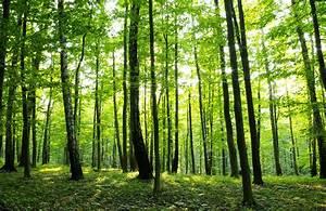 Fototapete Wald Zu Vlies Fototapete Fototapeten Tapete