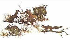 Life In The Taiga : la zona boreale comprende tutte quelle zone che fanno parte dell 39 emisfero settentrionale cio il ~ Frokenaadalensverden.com Haus und Dekorationen
