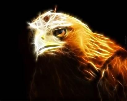 Eagle Hawk Golden Wallpapers Animals Spirit Guide