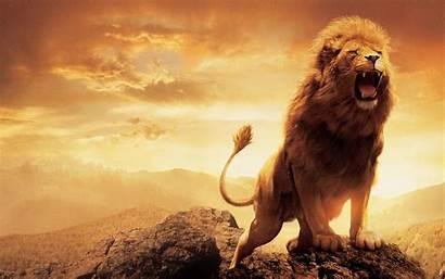 Narnia Lion Wallpapers Macbook Retina Pro Movies