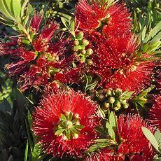 Southern California Gardening Shrubs Extend The Bloom Season