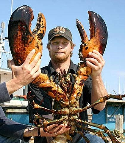 lobster giant sea cockroach animal pictures  facts