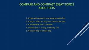 statement of purpose writing service bangalore studymode compare and contrast essay with cats and dogs studymode compare and contrast essay with cats and dogs