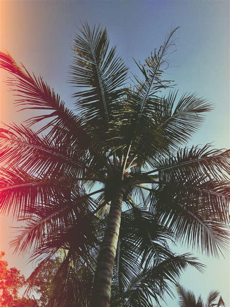 angle photo  coconut trees  stock photo