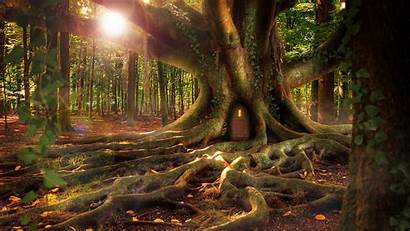 Forest Tree Fantasy Background Ultrawide Monitor Roots