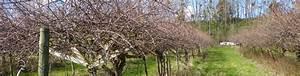 Tailler Les Kiwis : les vergers de larlenque saverdun en ari ge r gion midi pyr n es kiwibio les vergers de ~ Farleysfitness.com Idées de Décoration