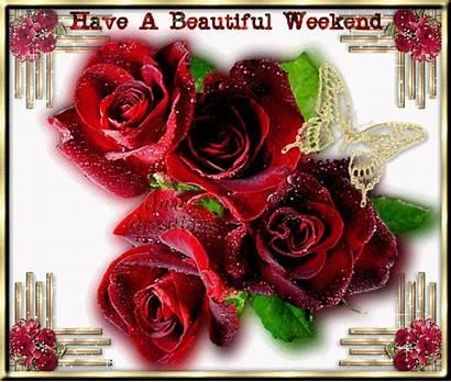 Weekend Roses Fanpop Rose Pink Saturday
