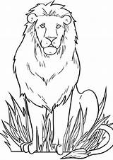 Lion Coloring Pages Animal Lions Animals Worksheets Printable Books Education Colouring Drawing African Adult Sheet Simple Tulamama Kindergarten Sheets Zoo sketch template