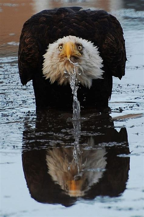 cute  funny pictures  thirsty animals page