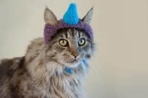 unicorn cat blue unicorn hat cat cats in hats