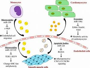 Extracellular Mirna Plays A Role In Cell