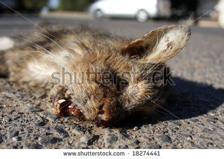 Dead Cat Stock Images, Royaltyfree Images & Vectors