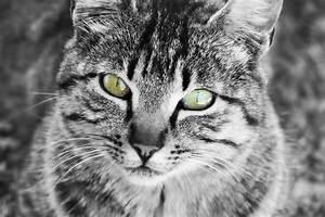 Flöhe Natürlich Bekämpfen : w rmer bei katzen wurmkur nat rliche entwurmungsmittel ~ Lizthompson.info Haus und Dekorationen