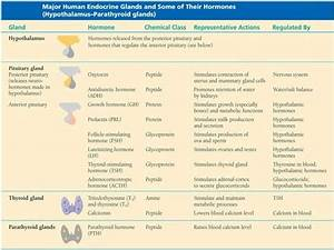 Endocrine Hormone Function Chart Glands And Hormones In Human Body