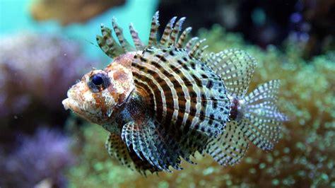 die schönsten aquarium fische süßwasser die 57 besten fische hintergrundbilder