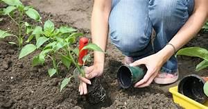 Pflanzen Im Mai : nutzgarten gartentipps im mai mein sch ner garten ~ Buech-reservation.com Haus und Dekorationen