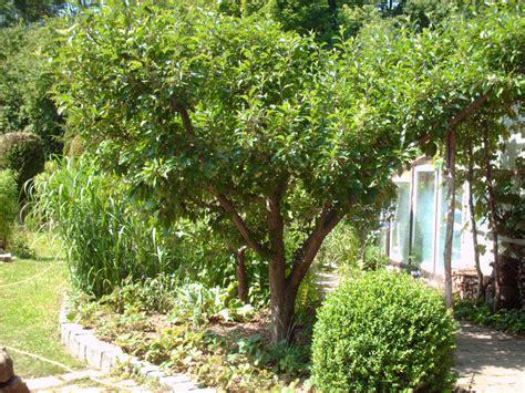 Buchsbaum Und Kletterrosen Im Garten » Gartenbobde Der
