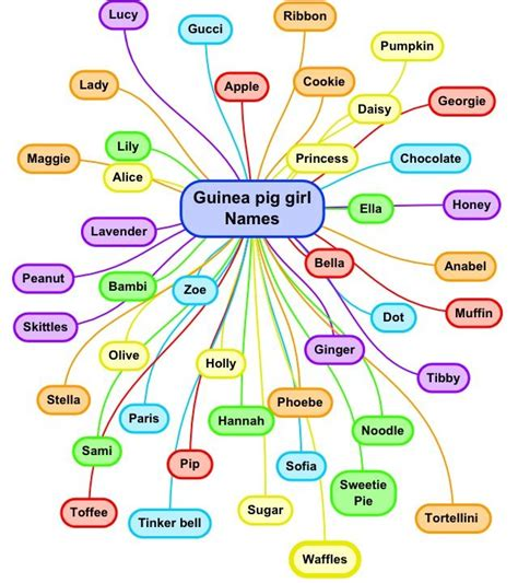 names for pigs guinea pig girl names pet names pinterest