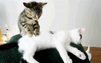 Kitten Gifs Cutest Massage Ever Watermelon Addict