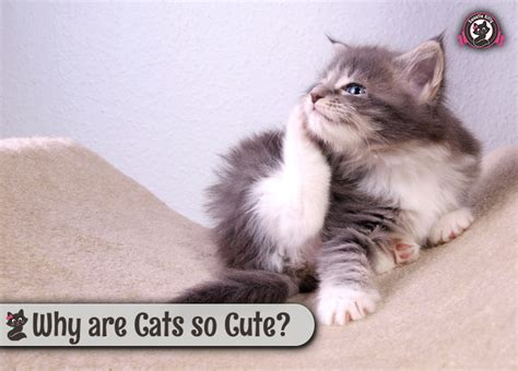 cats cute why cat kitty sweetie updated june last