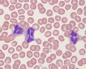 Canine blood | eClinpath