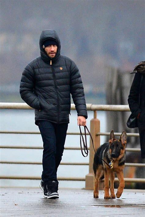 jake gyllenhaals thanksgiving walk  german shepherd