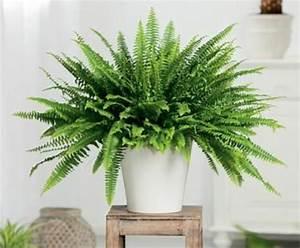 Pflanzen Die Kein Licht Brauchen : zimmerpflanzen die wenig licht brauchen ~ Lizthompson.info Haus und Dekorationen